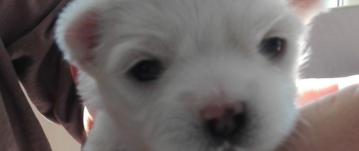 Quo Vadis ist heute 3 Wochen alt